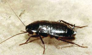 Народные приметы и поверья, связанные с появлением тараканов в квартире