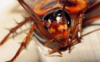 8 основних причин появи тарганів у вашій квартирі
