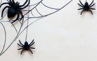 Как избавиться от пауков?