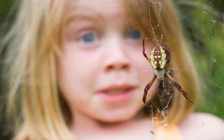 Страх насекомых у ребенка: как помочь малышу победить его?
