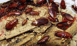 8 основных причин появления тараканов в вашей квартире