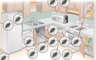 Самые эффективные способы избавления от тараканов в домашних условиях. Принципы, которыми необходимо руководствоваться в борьбе с насекомыми