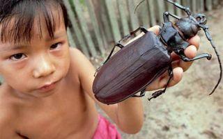 Может ли домашний таракан укусить человека? Как выглядит укус? Оказание первой помощи. Надо ли родителям обращаться к врачу, если ребёнка покусал таракан?