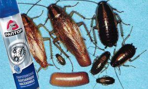 Уничтожение тараканов с помощью аэрозоля Раптор. Состав спрея, инструкция, безопасность, меры предосторожности во время использования, полезные советы