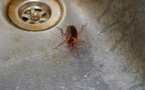 Использование раствора борной кислоты от тараканов: как приготовить жидкую кислоту? Правила обработки помещения. Достоинства и недостатки метода
