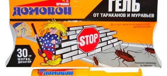 Выводим тараканов с помощью геля «Прошка Домовой»