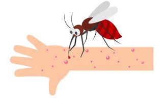Аллергия на яд насекомых