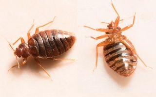 Какая температуря является губительной для клопов и их личинок? Воздействие высокими и низкими температурами: что эффективнее позволит уничтожить насекомых?