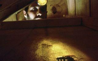 Дезинфекция от насекомых при ремонте подвала, нужна ли?
