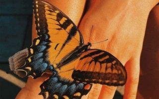 Как ухаживать за бабочками в домашних условиях?