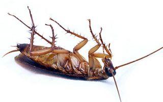 Уничтожаем тараканов спреем «Барон»