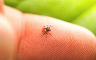 Что привлекает комаров, мух и клещей?