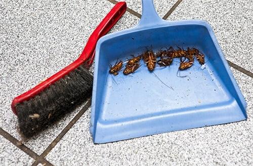 тараканы на совке