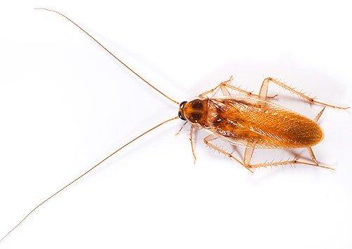 К чему появляются тараканы в квартире: приметы