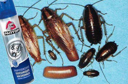 раптор от тараканов