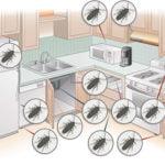 откуда берутся тараканы