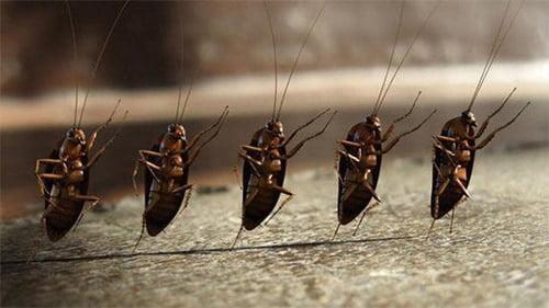 тараканы маршируют