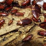 тараканы кишат