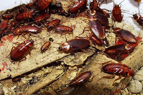 Что делать, если в квартире появились тараканы