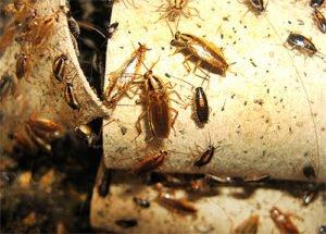 тараканы гнездо