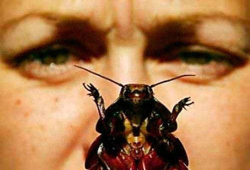 Тараканы от соседей - что делать, как избавиться если они ползут