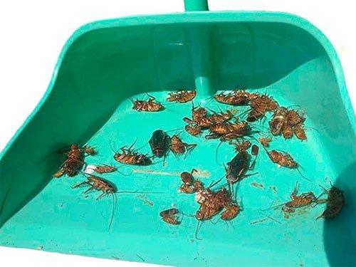 дохлые тараканы на совке