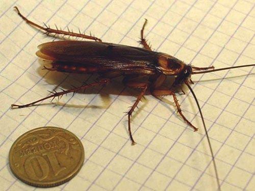 другие насекомые