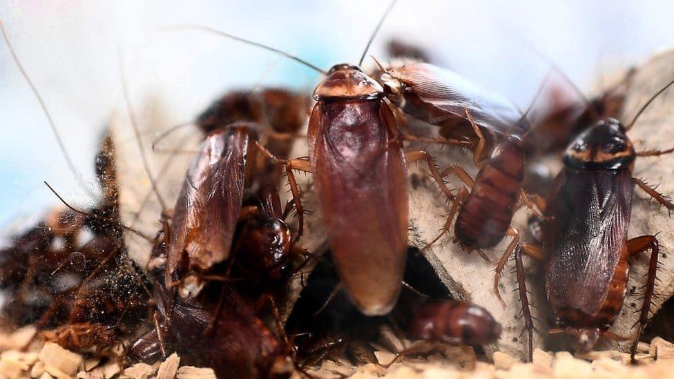 таракани