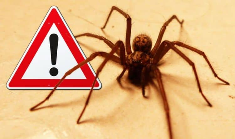 стоп пауки