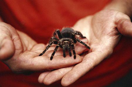 паук на ладонях