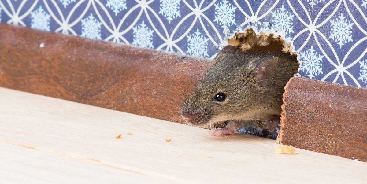 мыши в квартире