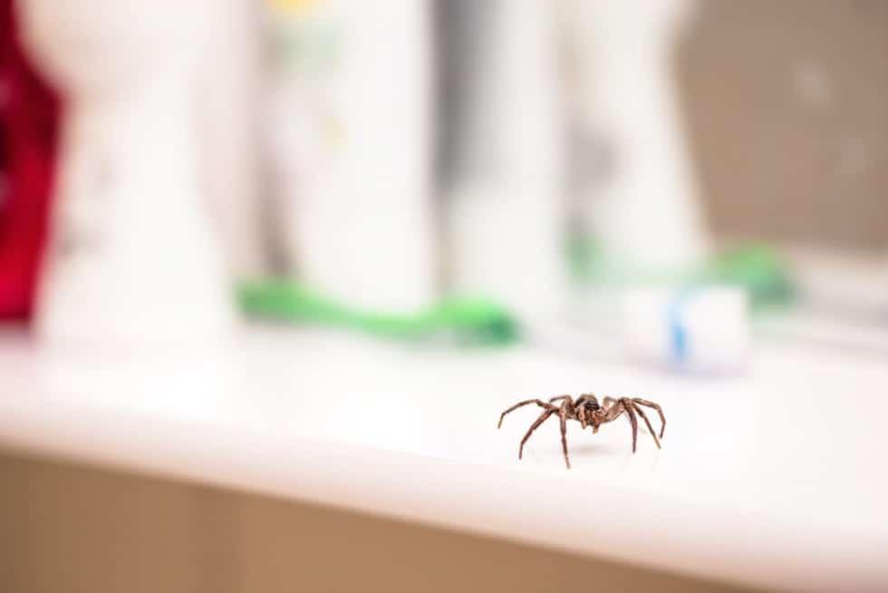 паук ползет