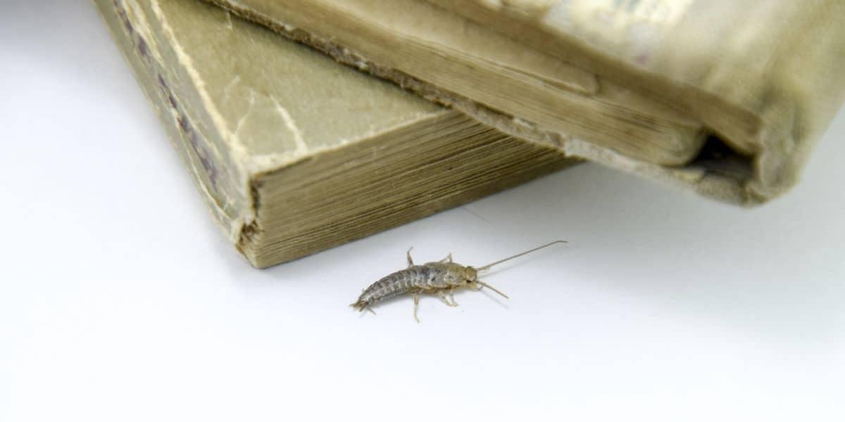 книжные жуки