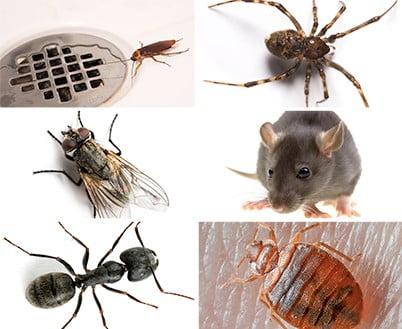 насекомые в доме