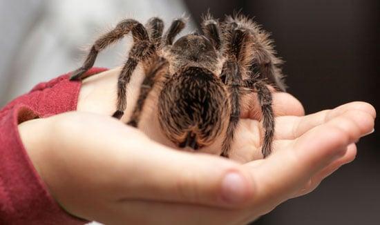 огромный паук на руке