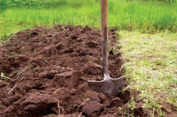 перекопанная земля