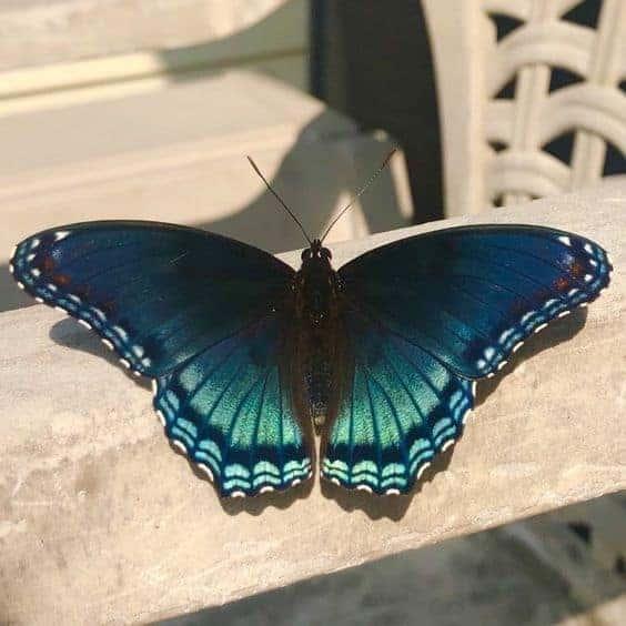 бабочка в доме