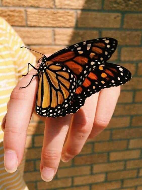 бабочка в квартире