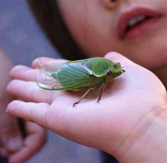 ребенок держит в руке насекомое