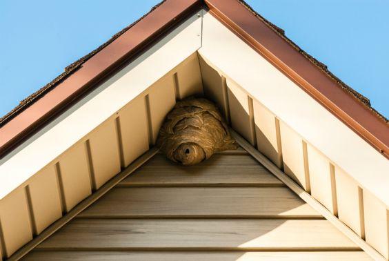 осиное гнездо на даче