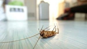 дохлый таракан на полу