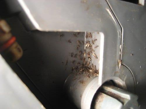 насекомые на кухне в оборудовании