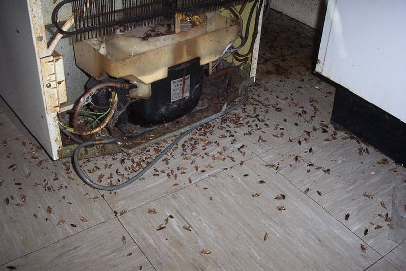 тараканы под холодильником